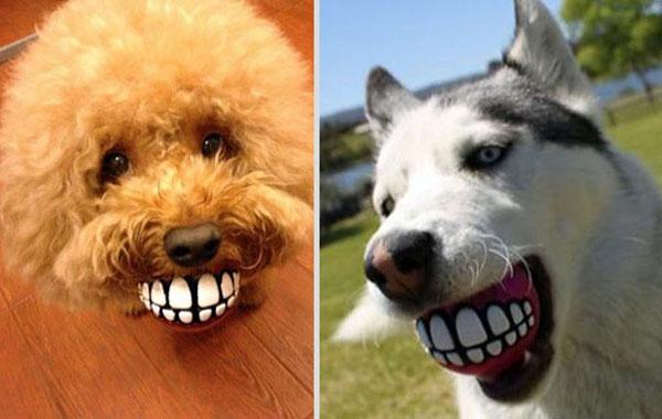 rogz-grinz-baballe-amusante-pour-chien
