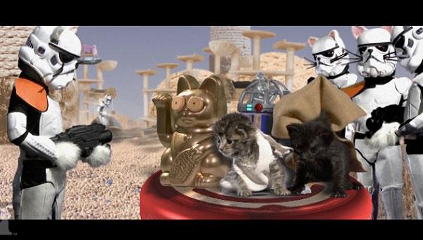 parodie star wars avec des chats