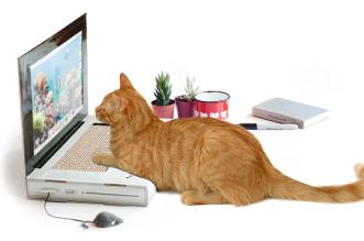 faux-ordinateur-portable-pour-chat